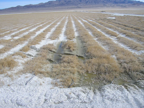 Saline Soils, Owens Valley, California
