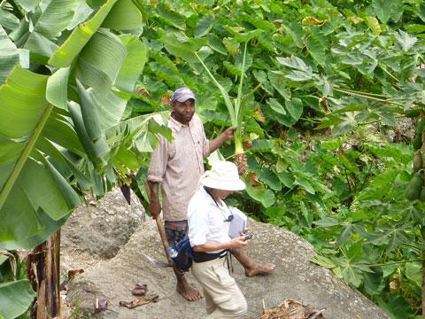 Drip Irrigation Installation, Cape Verde, Africa
