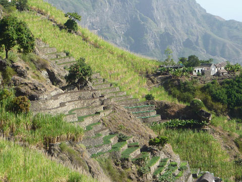 Irrigated Farms, Cape Verde
